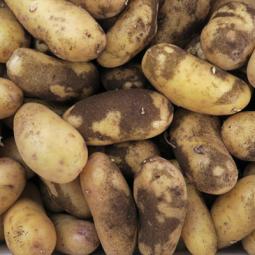 Potato Juliette Des Sables 1KG